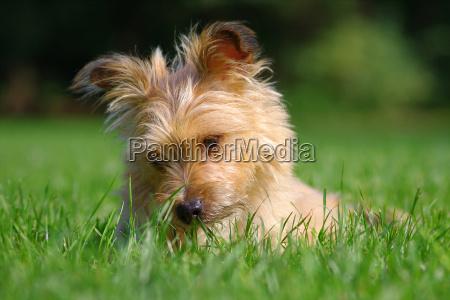mi, perro - 5985783