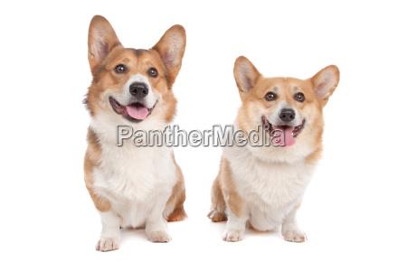 mascotas animal de peluche lieblingstier