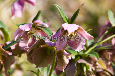 verde marron flor primavera niger christian