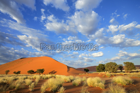 hierba duna y cielo namibia