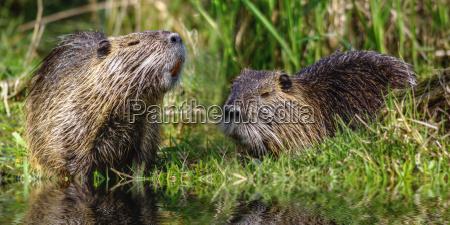 medio ambiente los animales berlin naturaleza