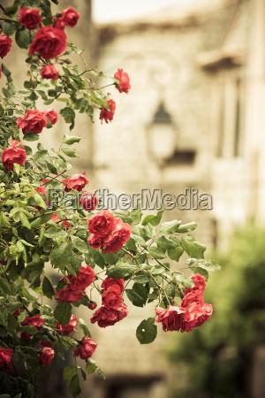 rankrose en callejon medieval en pueblo