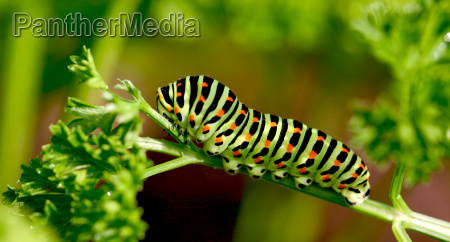 jardin insecto mariposa verano veraniego devorar