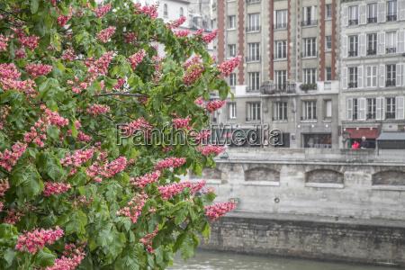 blooming castanyo que alberga fachada en