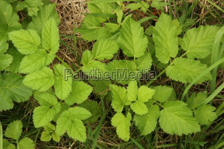 mala hierba pagina planta naturaleza