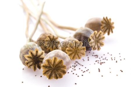 semillas de amapola y cabezas de