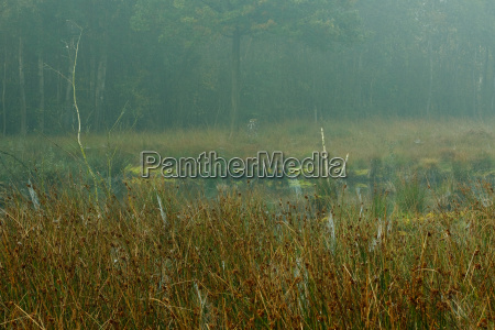 moorland in the fog