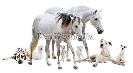 grupo de mascotas blancas