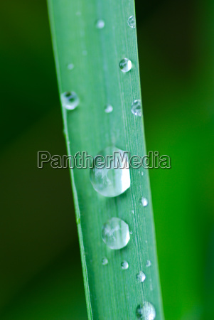 stalk water drop waterdrop water meadow