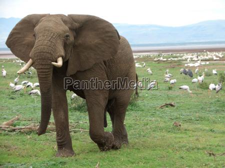 medio ambiente africa elefante reserva natural