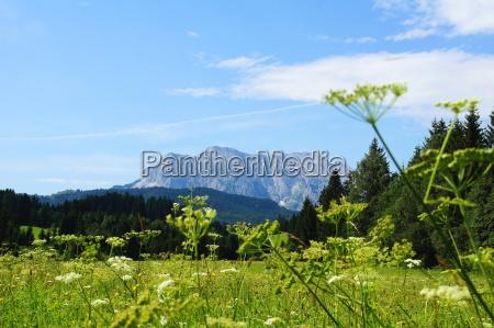 montanyas verde alpes verano veraniego baviera
