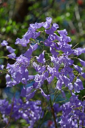 africa namibia flores purpura violeta sangrar