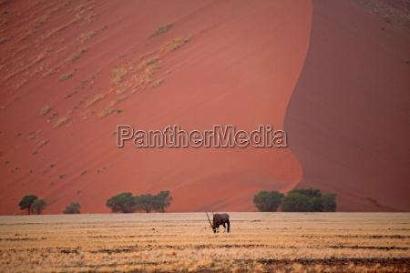 desierto africa namibia duna arenas arena