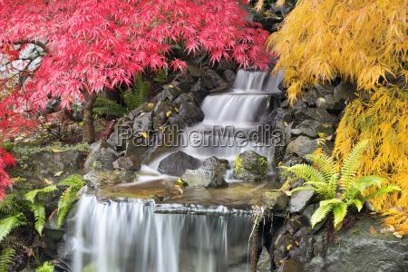 backyard waterfall with japanese maple trees