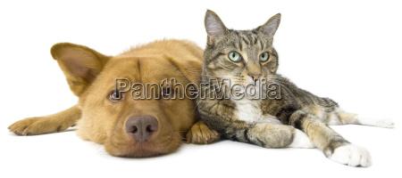 perro y gato junto angulo ancho