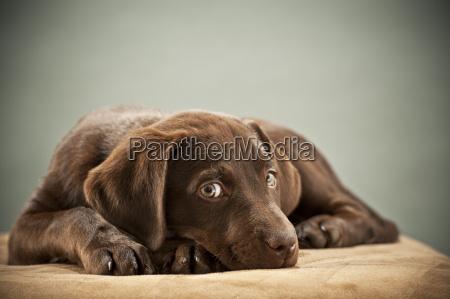 cachorro con mirada de piedad