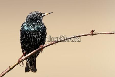 animal pajaro los animales aves estrella