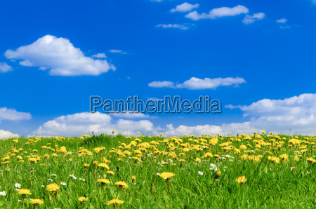 prado de primavera con rayo de