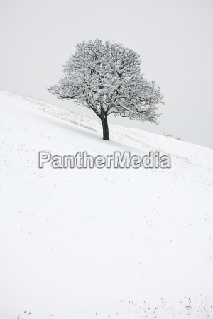 invierno frio nieve roble planta naturaleza
