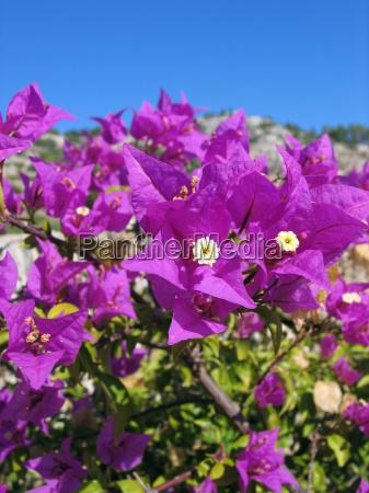 flor planta violeta sin nubes naturaleza