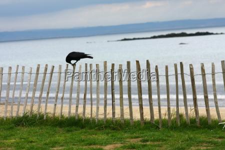 horizon bird birds coast scotland raven