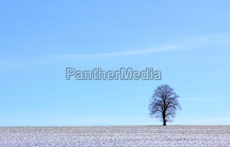 árbol, invierno, campo, prado, cielo, nieve - 8773456