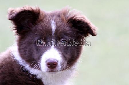 mascotas los animales perro perros cachorro