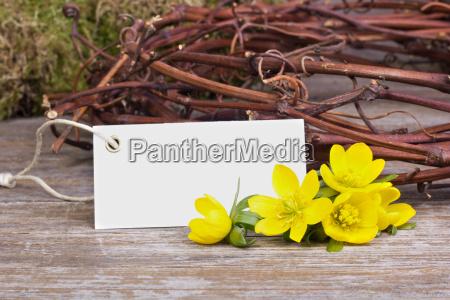 flor flores planta primavera dia de