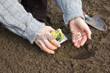 mano manos primavera frijoles espermatozoide jardinero
