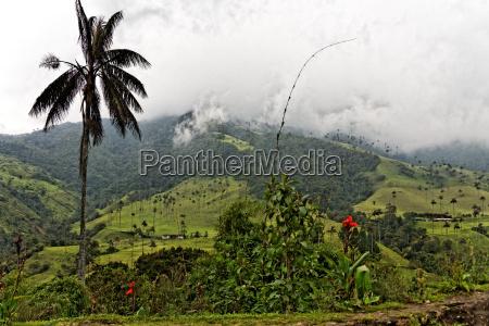 valle del cocora quindio colombia