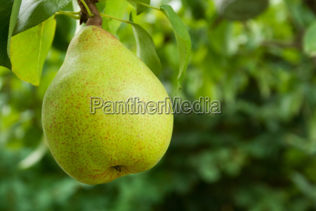 hoja arbol arboles verde hojas maduro