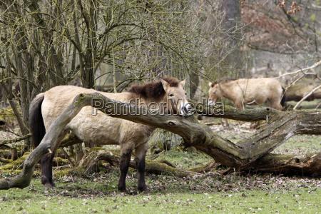 caballo caballos caballo salvaje
