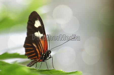medio ambiente animal mariposa los animales