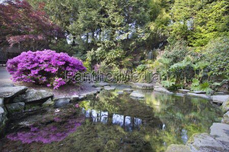 cascada en crystal springs rhododendron garden