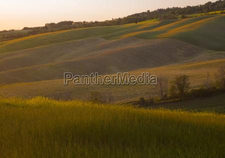 orange and purple colored field in