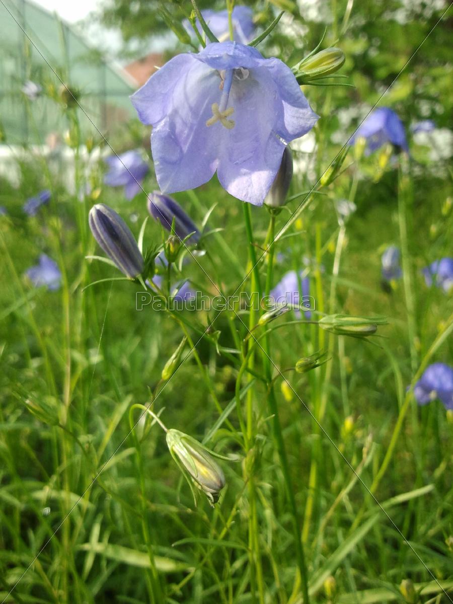 flor, planta, verde, flores, púrpura, capullo - 9425048