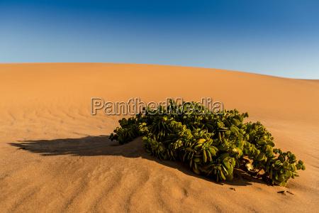 existir vida desierto africa calor duna