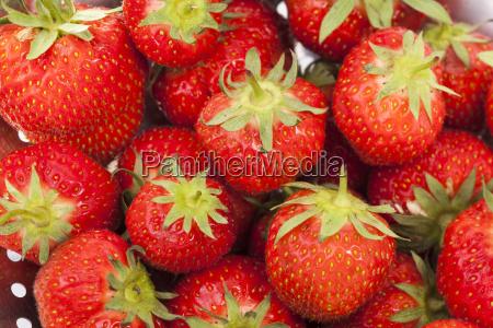 dulce frutas fruta bayas postre fresas