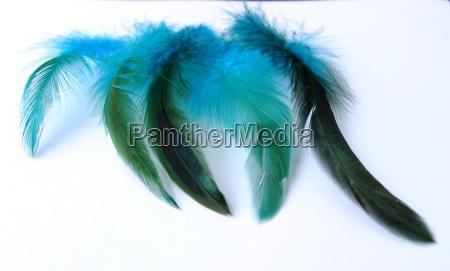 azul objeto joyeria primavera pluma