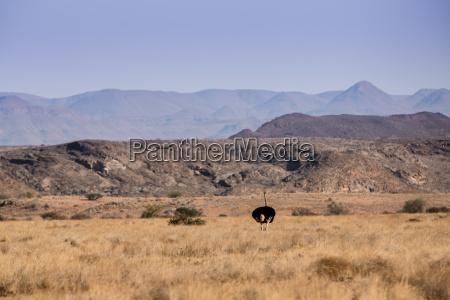pajaro africa namibia aves fauna pajaros