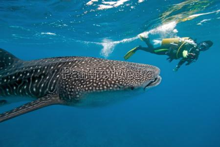 pescado camara fotografo tiburon ballena buceo
