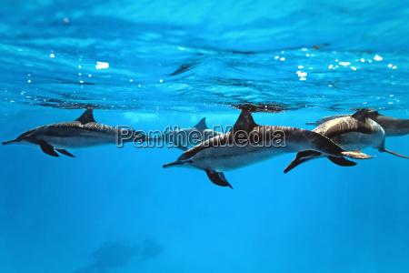 delfin submarino mamiferos las ballenas comun