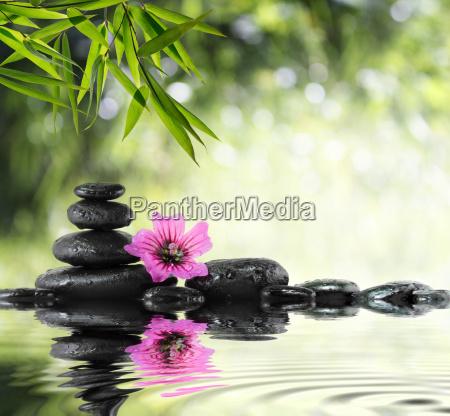 piedra negro y los hibiscos con