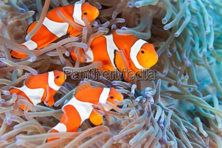 pescado submarino fauna anemona agua de