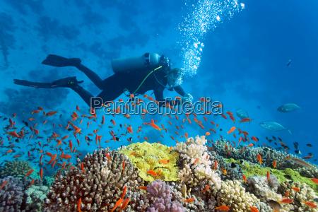 pescado submarino fauna arrecife buzo naturaleza