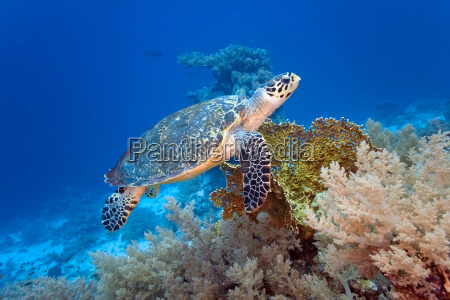 animal salvaje pescado submarino fauna tortuga