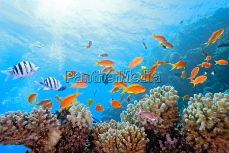 pescado reflexion submarino espejo fauna arrecife