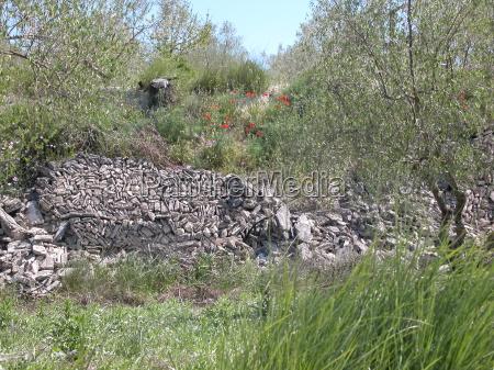 pared romana en espanya