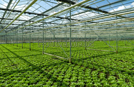 interior paises bajos vegetal horticultura cultivo