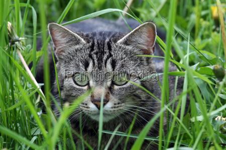 un gato al borde del ataque